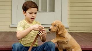 A Dog's Purpose (2017) Full Movie - HD 1080p BluRay