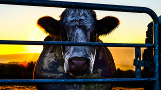 Cowspiracy: The Sustainability Secret (2014) Full Movie - HD 720p
