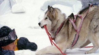 Eight Below (2006) Full Movie - HD 720p