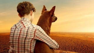 Red Dog True Blue (2016) Full Movie - HD 1080p BluRay